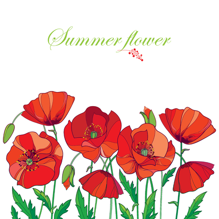 Composition with outline red Poppy or Papaver flower, bud and green leaves isolated on white background.