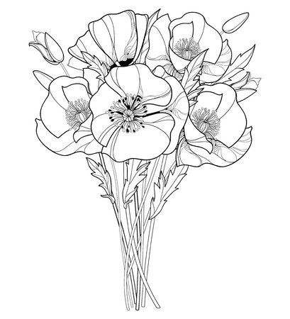 Bouquet with outline Poppy flower, bud and leaves in black isolated on white background. Illustration