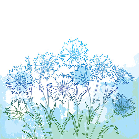 Bouquet with outline Cornflower or Knapweed or Centaurea flower, bud and leaf in blue on the textured pastel background. Çizim