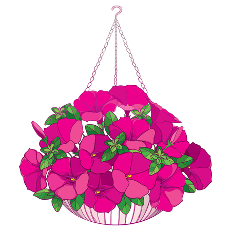 Bouquet with outline pink Petunia flower, ornate green leaf and bud in ornamental flowerpot isolated on white background. Home garden plant Petunia in contour style for summer design.