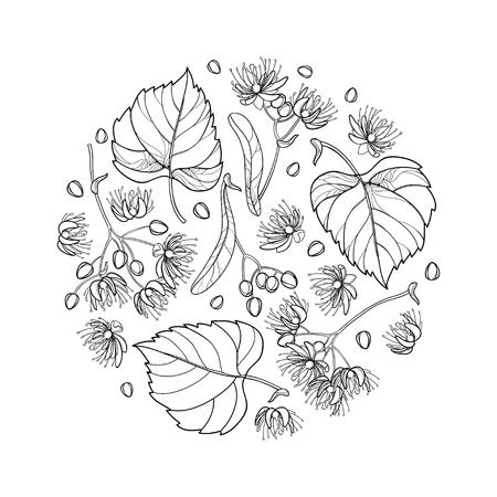 Composición redonda de diseño de verano de flores de tilo o tilo