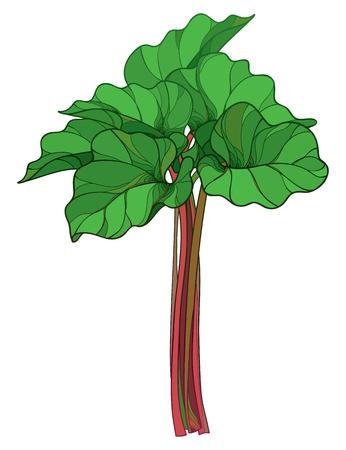 Rhubarb colored vector design.