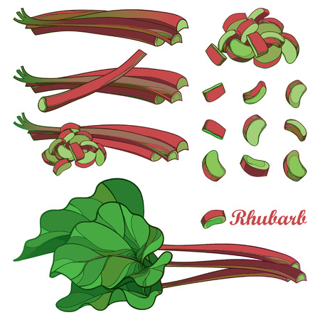 Set with rhubarb plant for organic food design. Ilustracja