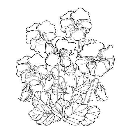 Bouquet with outline Pansy or Heartsease or Viola tricolor flower and leaf in black isolated on white background. Pansy flower in contour style for floriculture, summer design and coloring book.