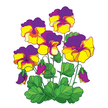 Bouquet with outline yellow and purple Pansy or Heartsease or Viola tricolor flower and green leaf isolated on white background. Lilac Pansy flower in contour style for summer design. Illustration