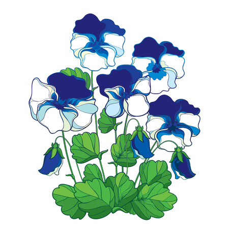 Bouquet with outline blue and white Pansy or Heartsease or Viola tricolor flower and green leaf isolated on white background. Blue pastel colored Pansy flower in contour for summer design. Illustration