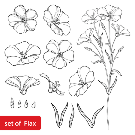 Set with outline Flax or Linseed or Linum flower bunch, bud and leaf in black isolated on white background. Ornate cultivated Flax plant in contour style for summer design and coloring book.