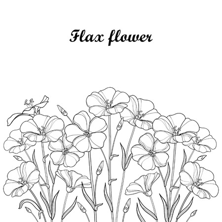 Bouquet with outline Flax plant or Linseed or Linum. Flower bunch, bud and leaf in black isolated on white background. Ornate Flax in contour style for summer design and coloring book.