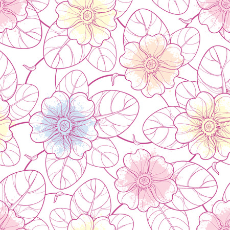 Seamless pattern with outline Primula or Primrose pink flowers on the white background. Elegance floral pattern with Primula in contour style for spring design.