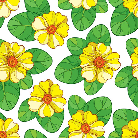 Seamless pattern with outline yellow Primula or Primrose flower and green leaves on the white background. Elegance floral pattern with yellow Primula in contour style for spring design.