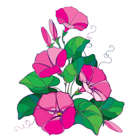 Bouquet with outline Ipomoea or Morning glory flower bell in pastel pink, green leaf and bud isolated on white background. Perennial climbing plant in contour style for summer design.