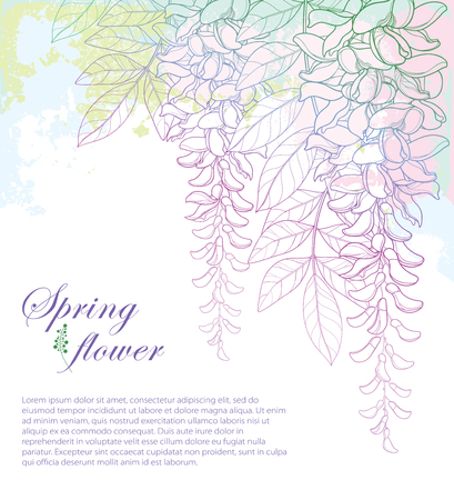 Corner bouquet of outline Wisteria or Wistaria flower bunch, bud and leaf on the pastel pink and green textured background. Blooming plant Wisteria in contour for greeting spring design.