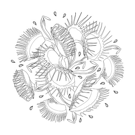 Round composition of Venus Flytrap or Dionaea muscipula in black isolated on white background. Carnivorous tropical plant Venus flytrap in contour for botany design or coloring book.