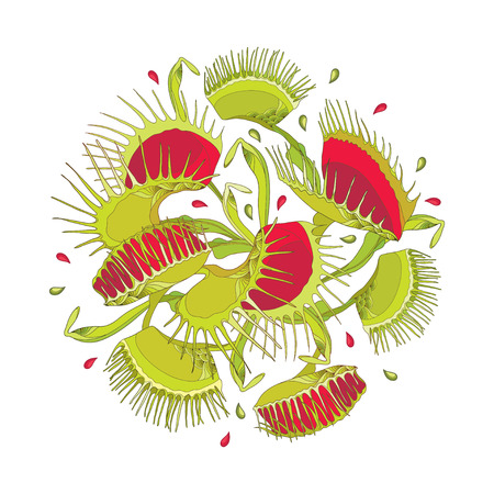 Round composition of Venus Flytrap or Dionaea muscipula in red and green isolated on white background. Carnivorous exotic tropical plant Venus flytrap in contour for botany design.