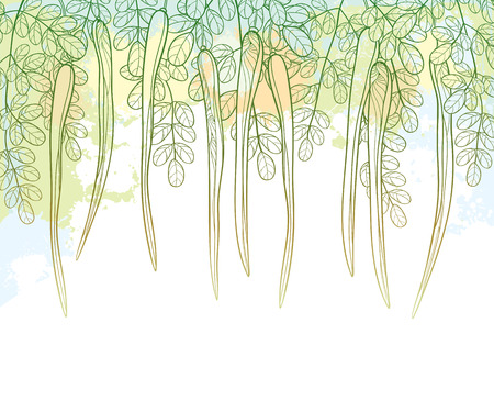 Outline Moringa oleifera or Drumstick or Horseradish branch with pods and ornate foliage in pastel green color on the textured background. Contour Moringa bunch for herbal design.