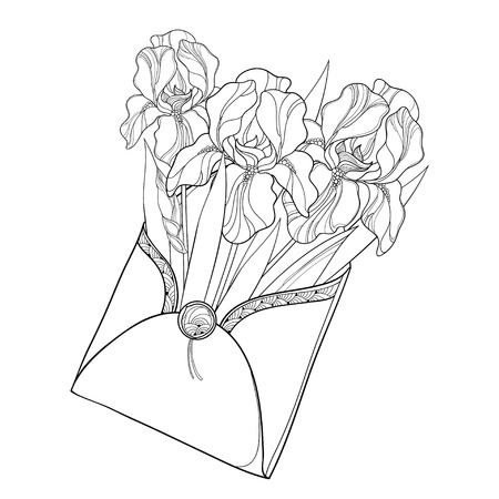 Bouquet with outline Iris flower, bud and ornate leaves in open craft envelope in black isolated on white background. Drawing of Iris in contour for spring or summer design and coloring book.