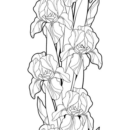 Seamless pattern with outline Iris flower, bud and leaf in black on the white background. Floral background with ornate Iris in contour style for spring or summer design and coloring book. Illustration