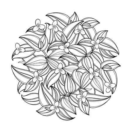 Rond boeket met omtrek Tradescantia of Wandering Jew-bloem. Bloem en blad in zwart geïsoleerd op een witte achtergrond. Kamerplant in contourstijl voor zomerontwerp of kleurboek. Stockfoto - 102960586
