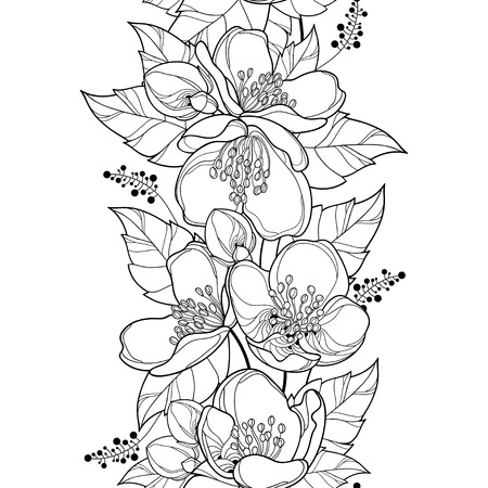 Seamless pattern with outline Jasmine flower bunch, bud and ornate leaf in black on the white background. Vertical border with contour jasmin flowers for summer design or coloring book.