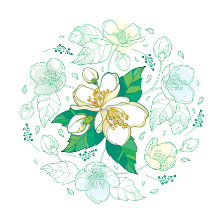 Round bouquet with outline Jasmine flower bunch, bud and ornate leaves in pastel green and white isolated on white background. Floral with Jasmine flower in contour style for spring design. Иллюстрация