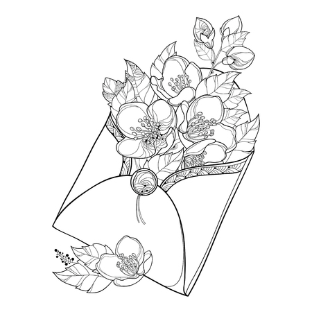 Bouquet with outline Jasmine flower bunch, bud and ornate leaf in black in open craft envelope isolated on white background. Floral with contour Jasmine for spring design or coloring book. Illustration