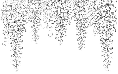 Arch and tunnel of outline Wisteria or Wistaria flower bunch, bud and leaf in black isolated on white background. Blossom climbing plant Wisteria in contour for spring design or coloring book.