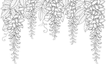 Arco y túnel de contorno Wisteria o manojo de flores Wistaria, brote y hoja en negro aislado sobre fondo blanco. Planta trepadora en flor Wisteria en contorno para diseño de primavera o libro para colorear.