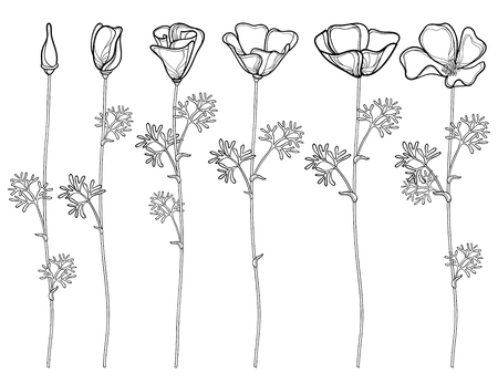 Set with outline California poppy flower or California sunlight or Eschscholzia, leaf, bud and flower in black isolated on white background. Contour poppies for summer design or coloring book.