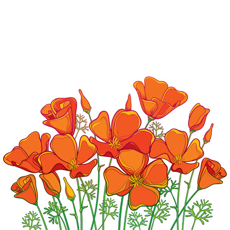 Bouquet of outline orange California poppy flower or California sunlight or Eschscholzia, green leaf and bud isolated on white background. Contour poppy for summer design. Иллюстрация