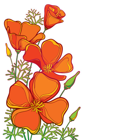 Corner bouquet of outline orange California poppy flower or California sunlight or Eschscholzia, green leaf and bud isolated on white background. Ornate contour poppies for summer design. Vettoriali