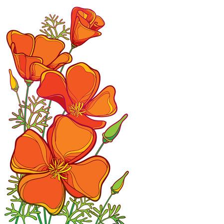 Ramo de esquina de contorno naranja flor de amapola de California o luz solar de California o Eschscholzia, hoja verde y capullo aislado sobre fondo blanco. Amapolas de contorno adornadas para el diseño de verano. Ilustración de vector