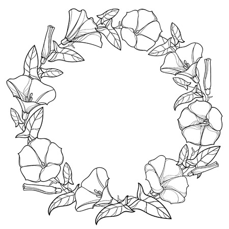 Round wreath with outline Convolvulus or Bindweed bell, leaf and bud in black isolated on white background. Climbing Bindweed flower in contour style for summer design or coloring book. Ilustração