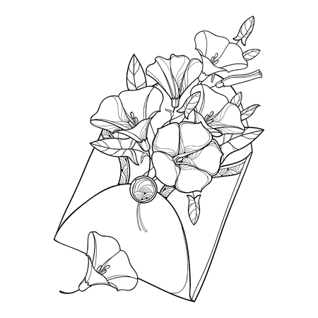 Bouquet with outline Convolvulus or Bindweed, ornate leaf and bud in open craft envelope in black isolated on white background. Contour Bindweed flower bunch for summer design or coloring book.