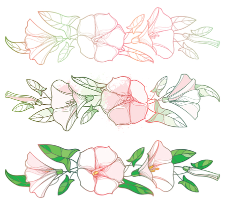 Set with outline Convolvulus or Bindweed flower garland, bell, leaf and bud in pastel pink and green isolated on white background. Bindweed flower bunch in contour style for summer design. Ilustração