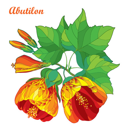 Bouquet with outline ornate Abutilon or Indian mallow flower in orange, bud and green leaf isolated on white background. Floral contour composition with Abutilon for summer design. Ilustração
