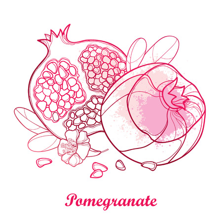 Outline Pomegranate half and whole fruit, ornate flower, leaf and seed in pastel pink isolated on white background. Drawing of ripe Pomegranate in contour style for exotic summer design.
