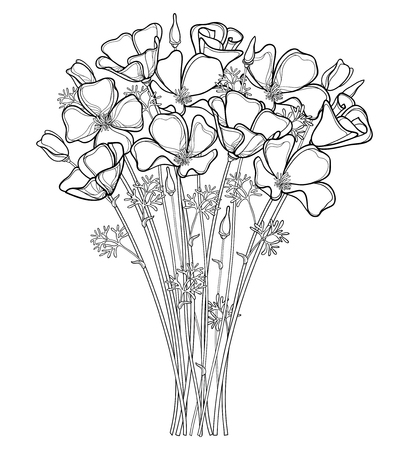 Bouquet of outline California poppy flower or California sunlight or Eschscholzia, leaf and bud in black isolated on white background. Contour ornate poppy for summer design or coloring book.