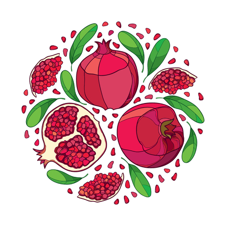 Round bunch with outline Pomegranate and red fruit isolated on white background. Drawing of ripe Pomegranate in contour style for exotic summer design.