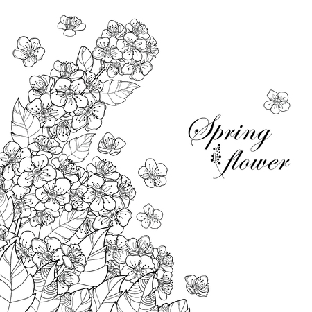 Corner bouquet with outline Spiraea or Spirea flower bunch and leaves in black isolated on white background. Blooming plant Spiraea in contour style for spring design and coloring book.