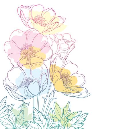 Handzeichnungs-Eckblumenstrauß mit Umriss-Anemonenblume oder Windblume, Knospe und Blatt in einer Pastellfarbe lokalisiert auf weißem Hintergrund. Verzierte Konturanemone für Frühlings- oder Sommerdesign.