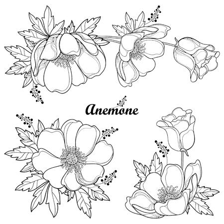 Set of hand drawing outline Anemone flower or Windflower, bud and leaf in black isolated on white background. Ornate contour Anemones for spring or summer design or coloring book. Ilustração Vetorial
