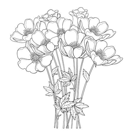 Bukiet rysunek ręka z konspektem Zawilec kwiat lub Windflower, pączek i liść na czarno na białym tle. Kwiecisty kontur Zawilce do projektowania wiosną lub latem lub kolorowanka.