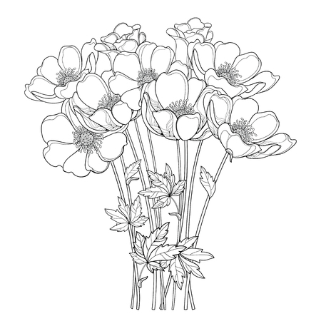 Hand drawing bouquet with outline Anemone flower or Windflower, bud and leaf in black isolated on white background. Ornate contour Anemones for spring or summer design or coloring book.