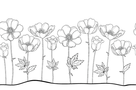 Seamless pattern of outline Anemone or Windflower, bud and leaf in black on the white background. Horizontal border with ornate contour Anemones for spring or summer design or coloring book.