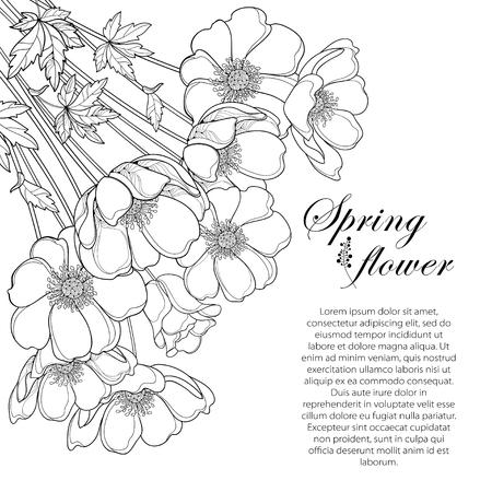 Rysunek rogu bukiet konspektu Anemone kwiat lub Windflower, pączek i liść na czarno na białym tle. Kwiecisty kontur Zawilce do projektowania wiosną lub latem lub kolorowanka. Ilustracje wektorowe