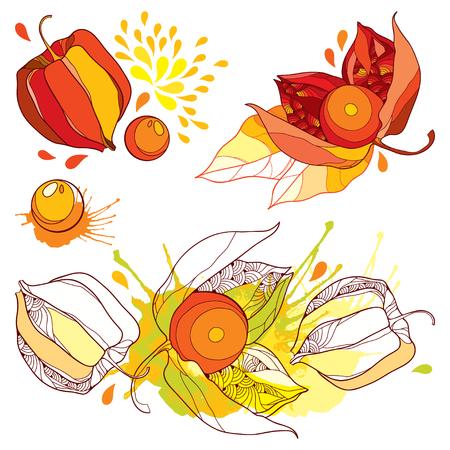Satz Bündel mit Umriss Physalis oder Kapstachelbeere oder gemahlene Kirschfrucht, Blatt und Beere in Rot und Orange lokalisiert auf weißem Hintergrund. Verzierte Konturpflanze für Herbstgestaltung. Vektorgrafik