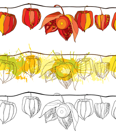 Seamless pattern with outline Physalis or Cape gooseberry or Ground cherry fruit isolated on white background. Horizontal border of contour Physalis for autumn design or coloring book.