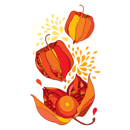 Drawing of bunch with outline Physalis or Cape gooseberry or Ground cherry fruit and berry in red and orange isolated on white background. Ornate contour plant for autumn design.