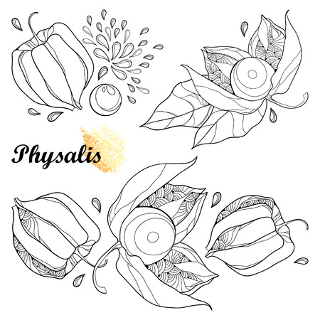 Set of bunch with outline. Isolated on white background. Ornate contour plant for autumn design or coloring book.