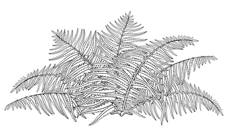 Drawing of outline fossil forest plant Fern with fronds in black isolated on white background. Contour Fern bush with ornate leaf for summer design or floral coloring book.